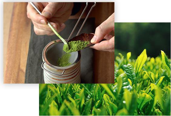 Giới thiệu trà xanh nguyên chất Bảo Lộc
